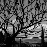 The Black Tree - Le Crestet - France