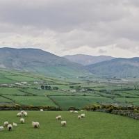 Champs irlandais - Irlande